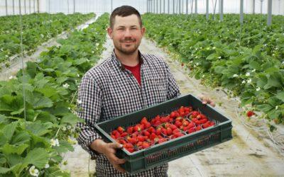 Les fraises qui ont le bon goût d'être locales